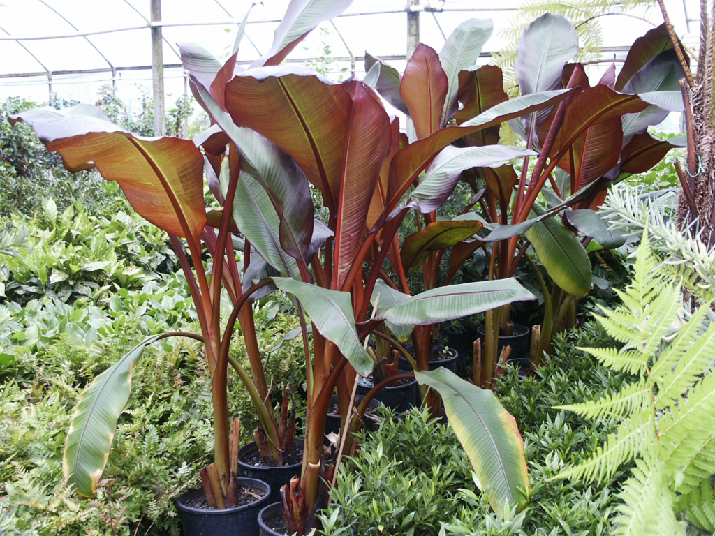 Plant Gallery Tropical Plants Landscaping In Haslet Tx