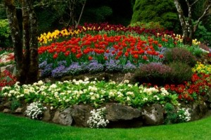 landscaping, flowerbeds, flowerbed maintenance, plant flowers, bedding plants