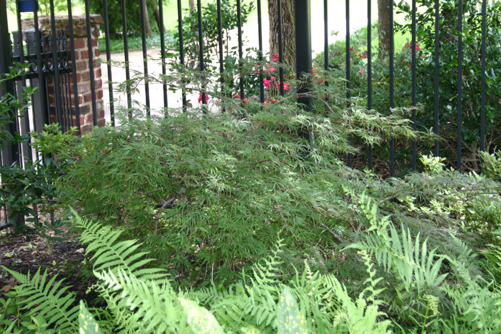 Lewisville Lawn Care Services