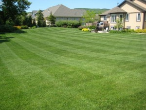 Fort Worth TX lawn maintenance