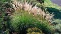 adagio-grass