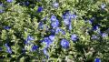 blue-daze