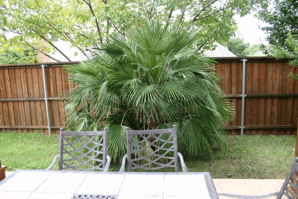 Tropical Plants Lawn Connections Llc