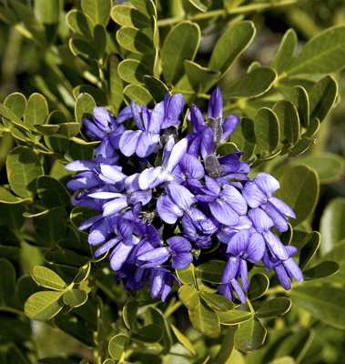 Ornamental Trees Lawn Connections Llc