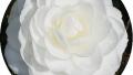 nuccios-gem-magnolia