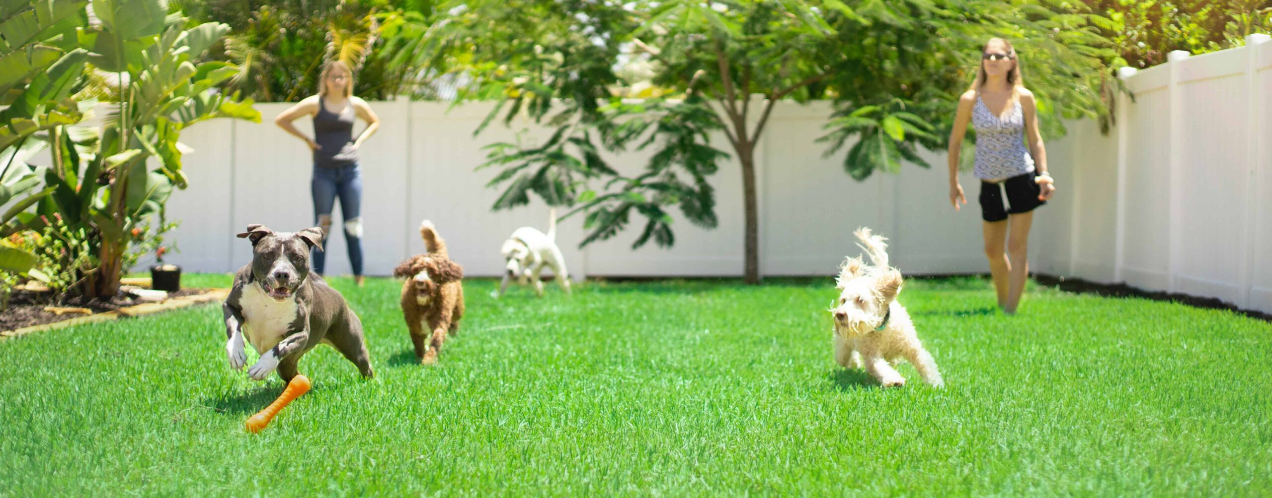 two adults play fetch with dogs in the backyard