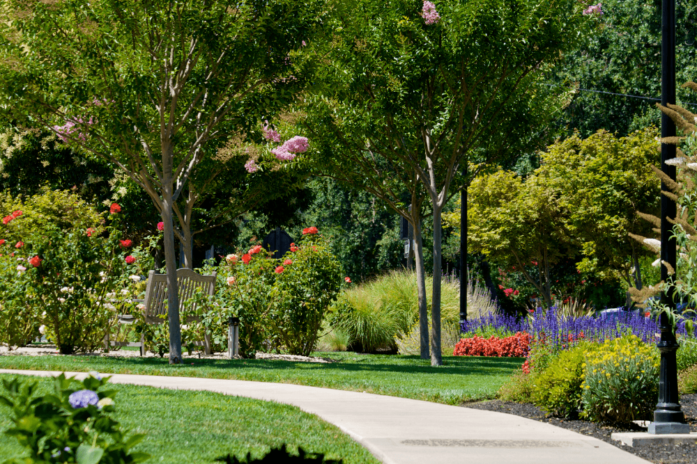 walkway surrounded by gardens and leading to a bench