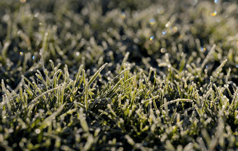 grass-close-up